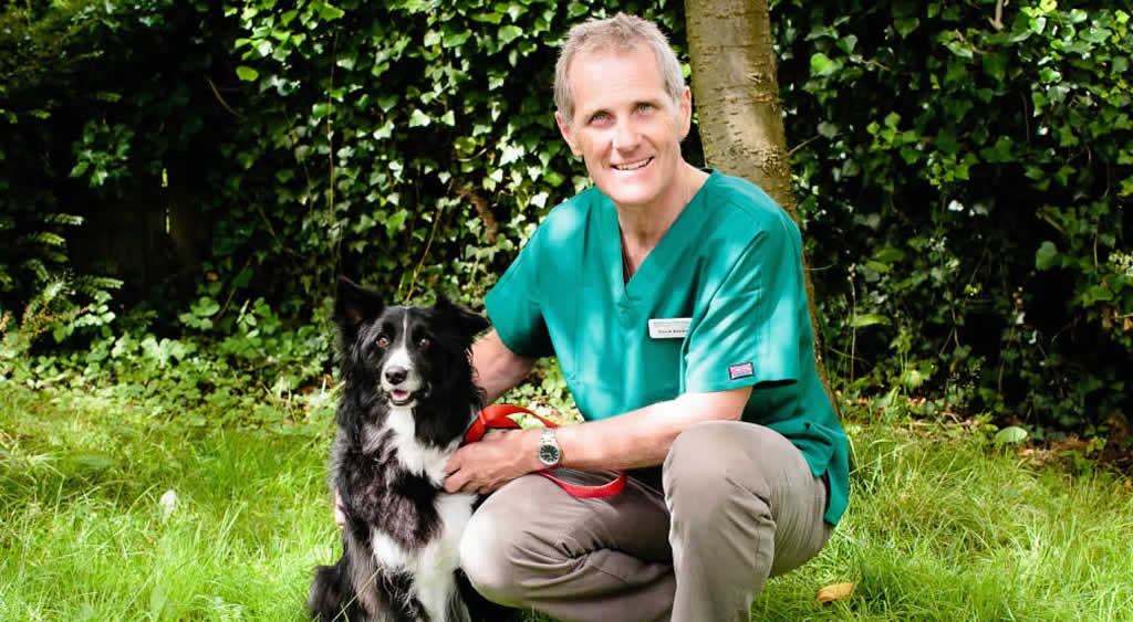 David Bentley and border collie